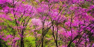 太平国家森林公园直通车